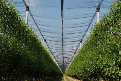 Orchard Support And Covering Systems