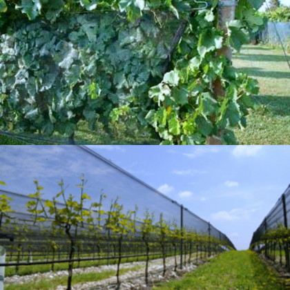 vineyard support and covering systems